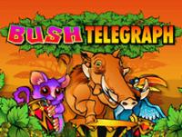 Bush Telegraph автомат